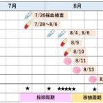 加藤レディースクリニック(KLC)の体外受精スケジュール